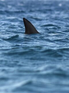Playa del Carmen Beach Closes After Shark Sighting, Experts Say No Risk