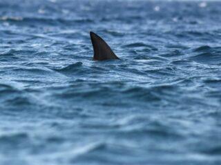 Playa del Carmen Beach Closes After Shark Sighting, Experts Say No Risk