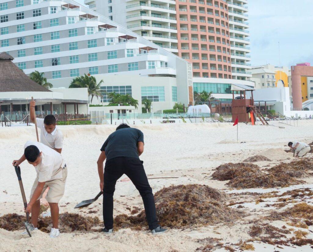 Workers-Clean-up-Seaweed