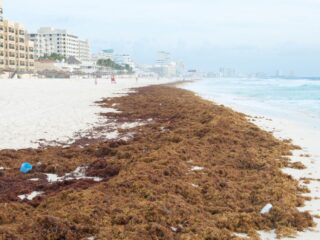 250 Km Of Beaches Around Cancun Overcome With Seaweed