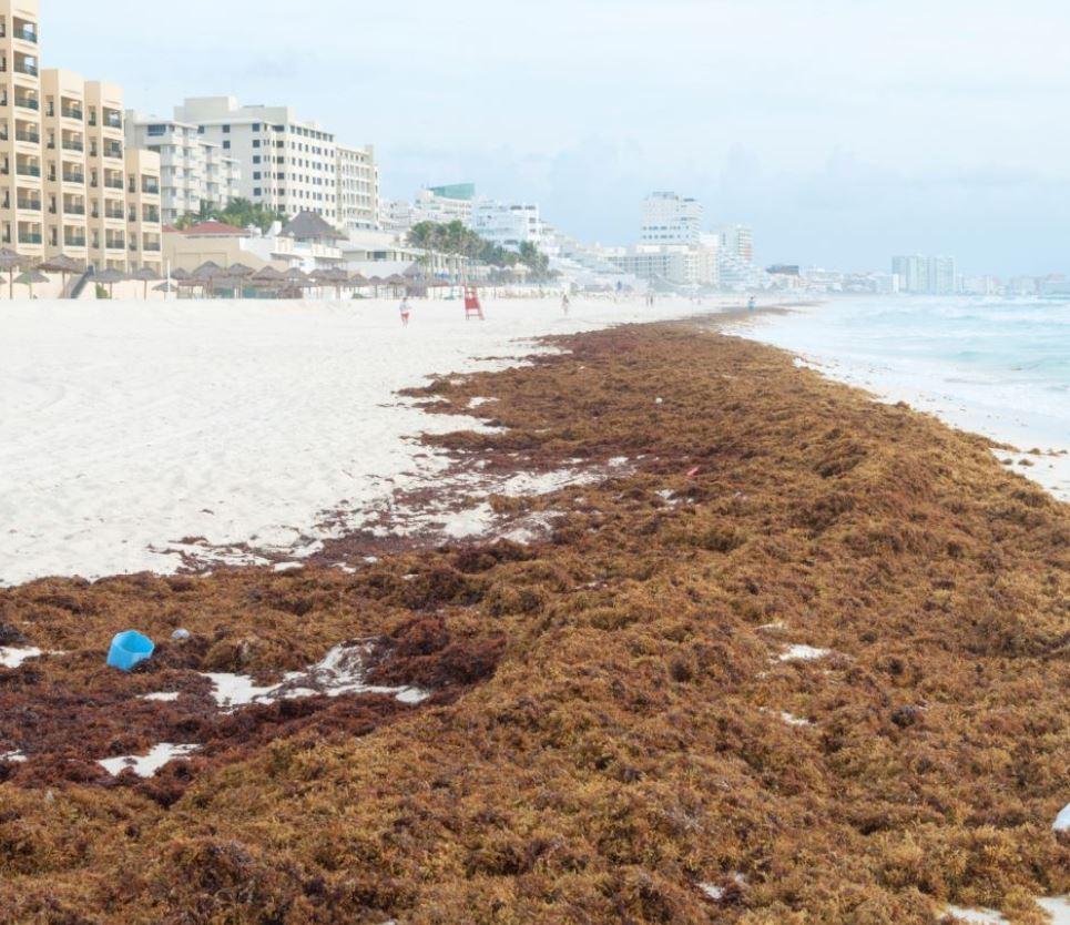 seaweed-in-cancun