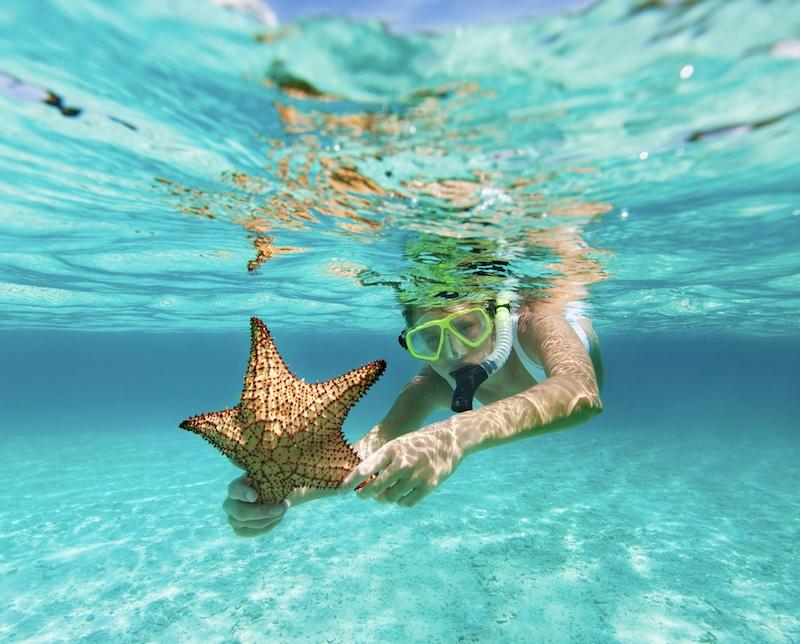 starfish snorkeling Cancun Caribbean Sea