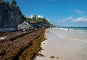 Tourism operators, local authorities, the navy, researchers and NASA ready to take on seasonal seaweed problem as a team.