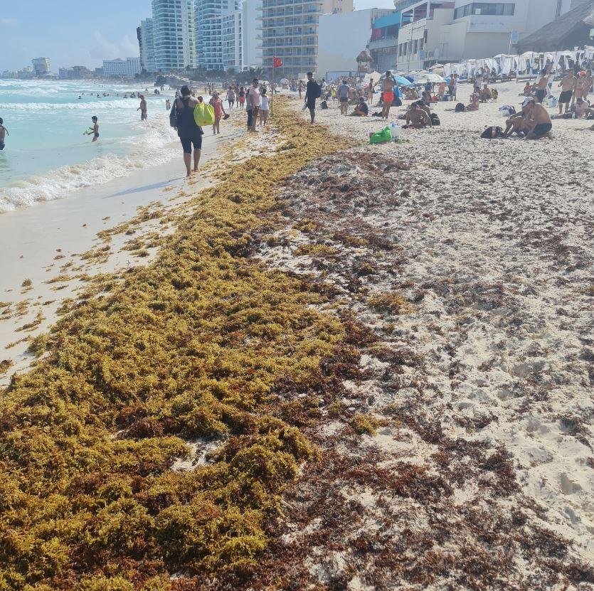 Sargassum on beach in cancun