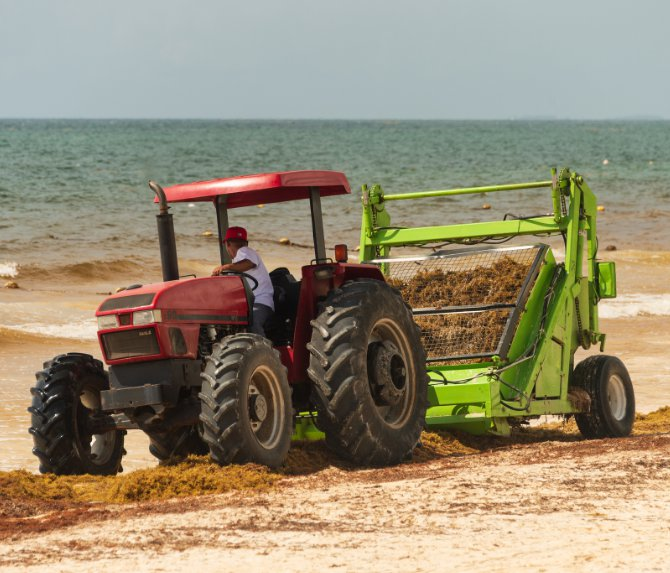 seaweed-tractor-cleaning