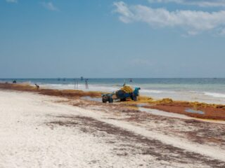 Sargassum has been a problem in major resorts of the Mexican Caribbean for almost a decade. But this summer season is bringing larger quantities than normal to these favorite tourist destinations. Last weekend alone, it was reported that over 2,000 tons of sargassum arrived in Mexican Caribbean coastal resorts.